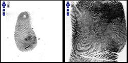 two fingerprints side-by-side for comparison