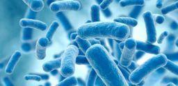 Come fare i controlli della contaminazione microbiologica nei luoghi di lavoro?