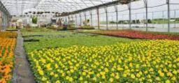 Fattori di rischio e sorveglianza sanitaria nel florovivaismo