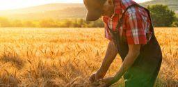 Imparare dagli errori: gli infortuni di lavoratori anziani in agricoltura