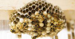 Lavoro in solitudine: morire per una puntura di vespa