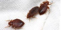 Il rischio biologico negli alberghi: legionellosi e cimici da letto