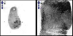 Il confronto delle impronte digitali: sembra facile!